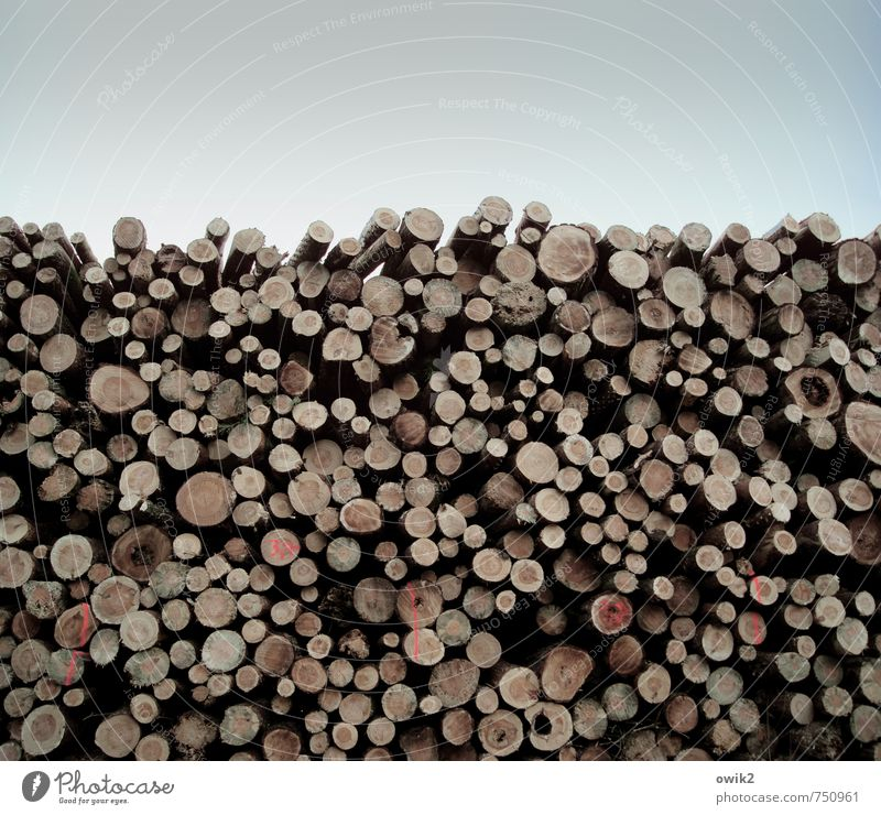 Lost Tribes Wood Lie Large Tall Many Patient Power Attachment Tree trunk Stack Consecutively Signs and labeling Round Cut sawn timber temporary storage Storage