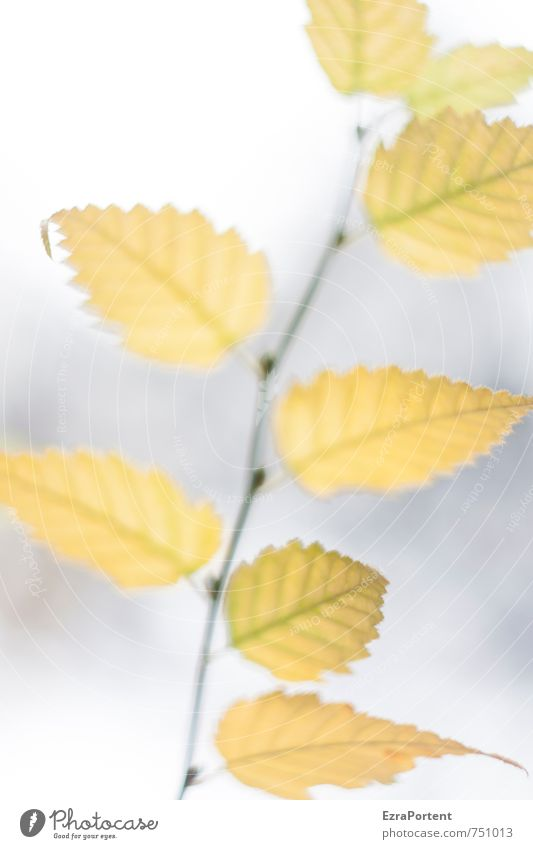 Nature Beautiful White Plant Tree Leaf Forest Yellow Environment Autumn Gray Bright Garden Weather Climate Esthetic