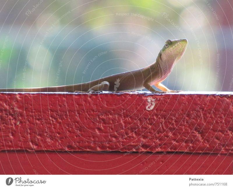 Animal Glittering Wild animal Observe Cute Curiosity Exotic