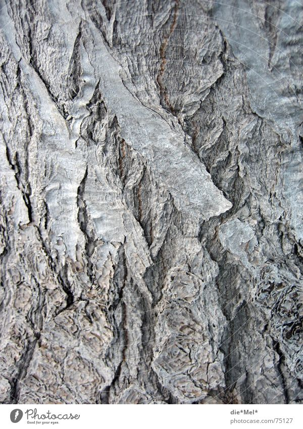 Old tree has many (ge)layers Tree Tree bark Gray Plant Volcanic crater Earmarked Structures and shapes Nature Line