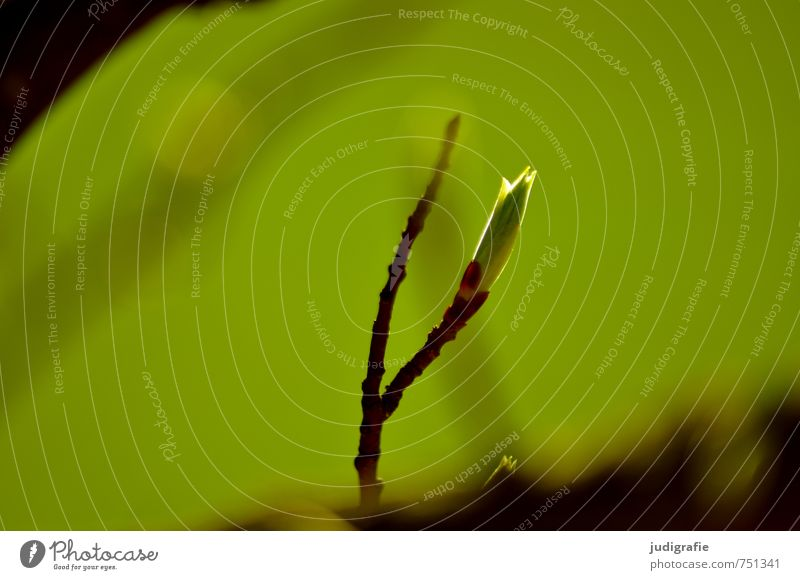 forest Environment Nature Plant Spring Tree Leaf Growth Natural Wild Green Leaf bud Colour photo Exterior shot Day Shallow depth of field