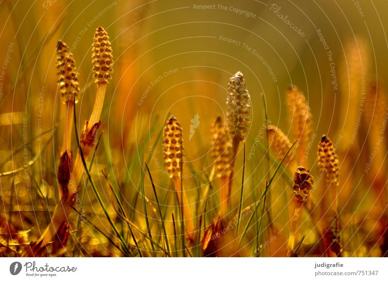 meadow Environment Nature Plant Grass Blossom Wild plant Meadow Illuminate Growth Exceptional Natural Yellow Gold Colour photo Exterior shot Deserted Light