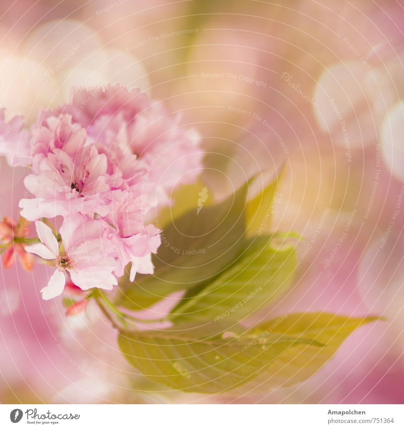 ::14-9:: Environment Nature Plant Animal Spring Summer Climate Tree Flower Leaf Blossom Garden Park Blossoming Dream Beautiful Pink Joy Happy Happiness