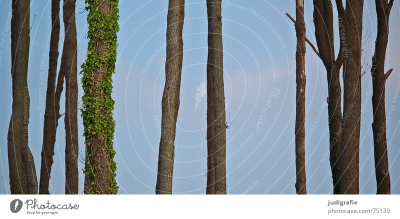 Nature Sky Tree Forest Life Death Tree trunk Tendril Ivy Clearing Overgrown Western Beach Individualist