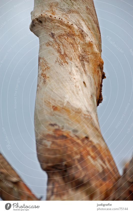 Nature Sky Tree Life Death Wood Corner Branch Rotate Sculpture Smoothness Bend Whorl Rotated Western Beach