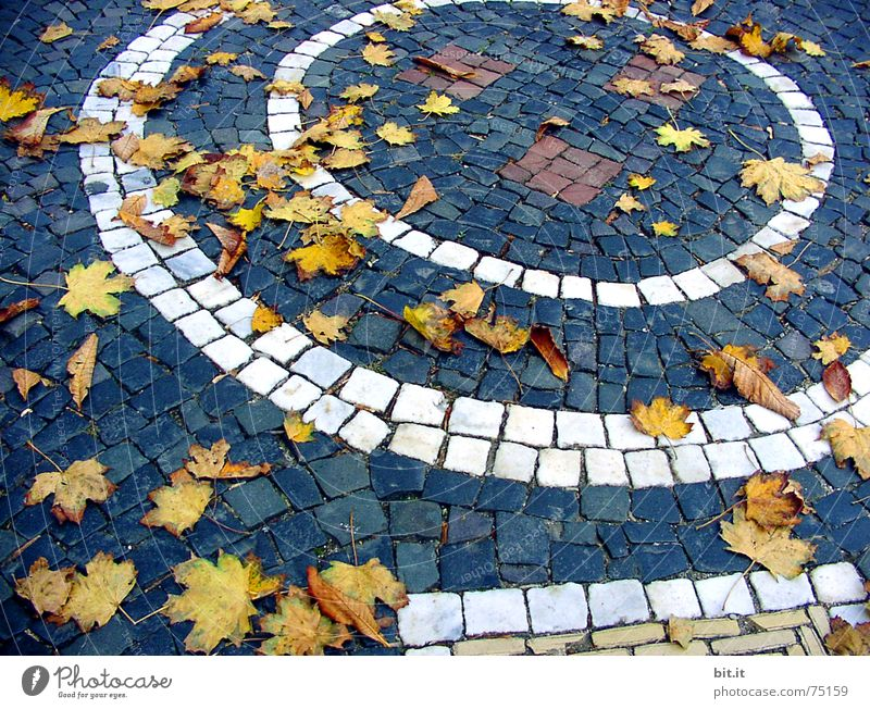 Plant Leaf Street Autumn Stone Moody Wind Environment Circle Round Joie de vivre (Vitality) Gale Passion Traffic infrastructure Cobblestones Respect
