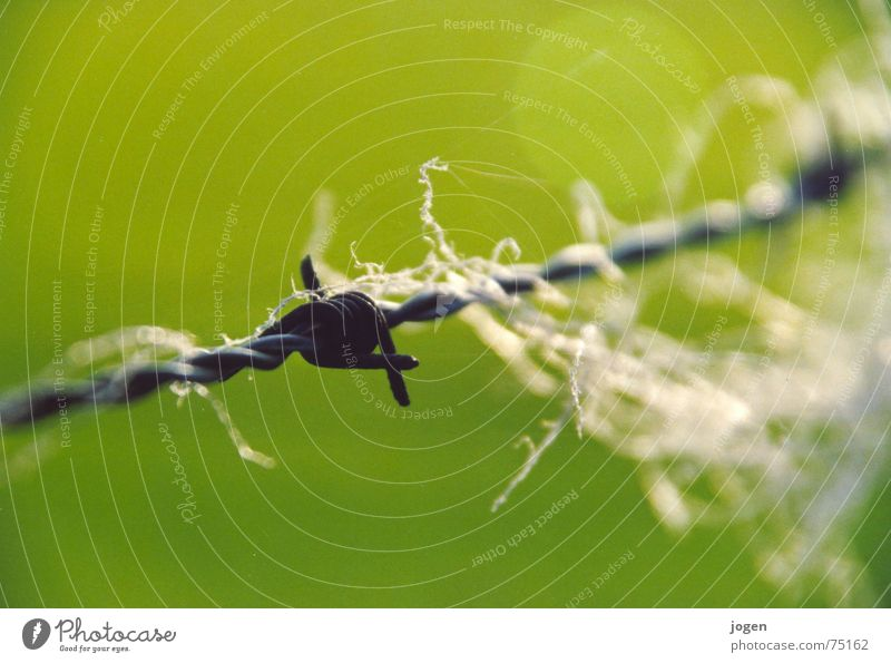 Green Point Pasture Fence Sheep Wire Mammal Sewing thread Wool Barbed wire Barbed wire fence Macro (Extreme close-up)