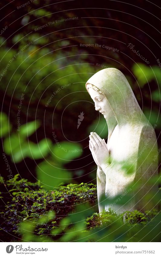 Prayer in the green Nature Plant Tree Leaf Park Statue statue of the Virgin Mary Esthetic Beautiful Feminine Green White Trust Compassion Goodness To console