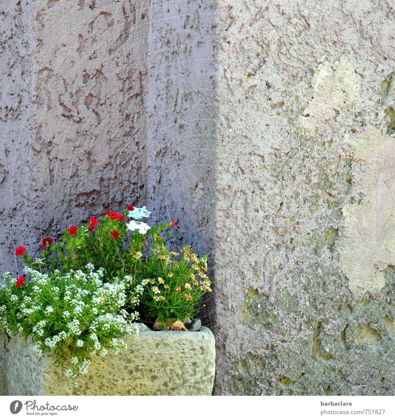 niche existence Decoration Plant Flower Blossom Pot plant Building Wall (barrier) Wall (building) Facade Niche Containers and vessels Corner Stone Concrete