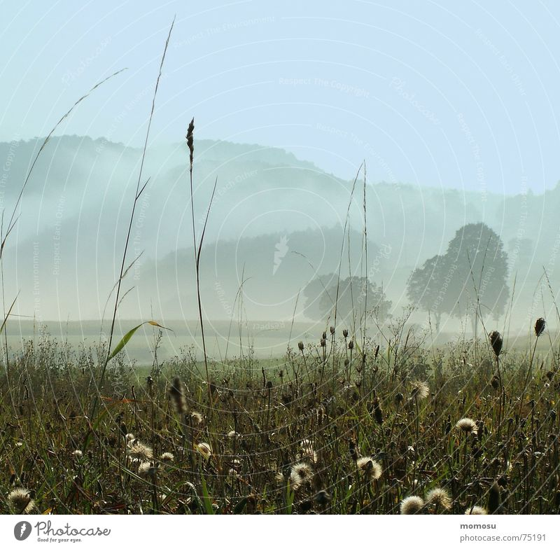 morning of fog Autumn Fog Moody Grass Tree Meadow Mountain Sky Light (Natural Phenomenon)