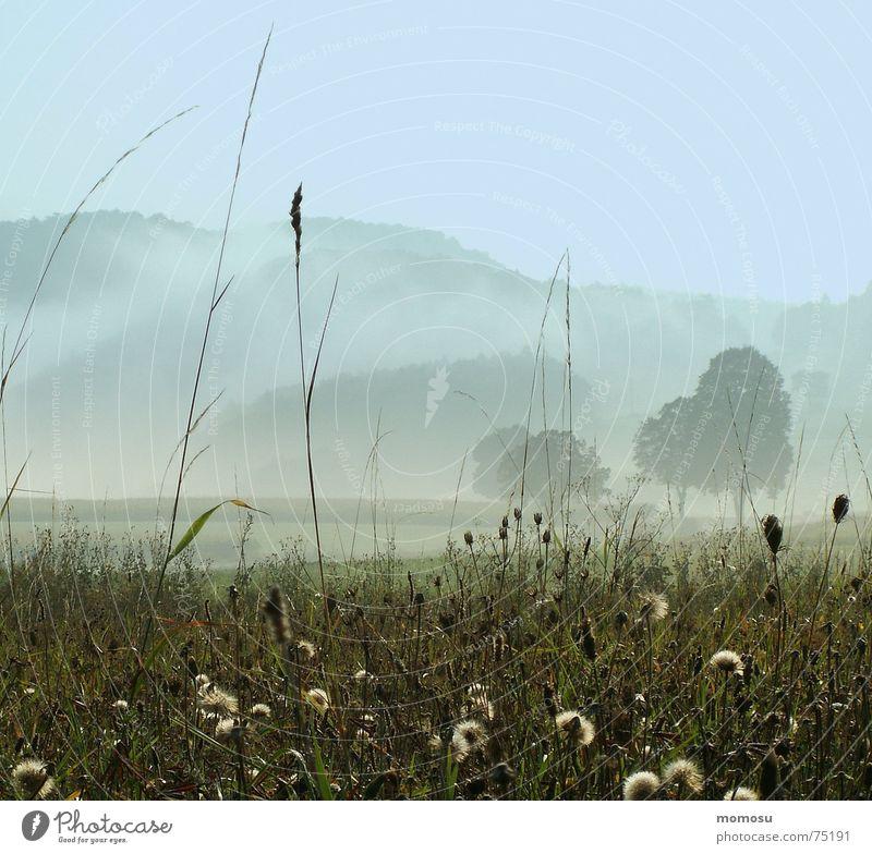 Sky Tree Autumn Meadow Grass Mountain Moody Fog