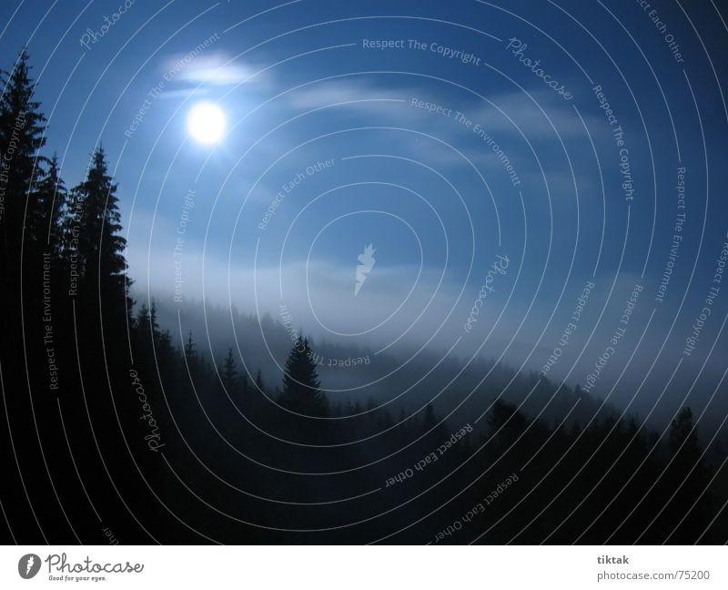 Tree Blue Vacation & Travel Calm Black Forest Dark Autumn Fog Tourism Romance Fir tree Moon Ghosts & Spectres  Night Eerie