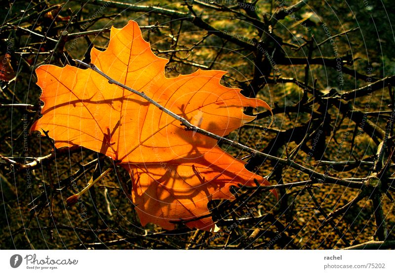 Nature Beautiful Tree Red Summer Leaf Colour Autumn Sadness Orange Brown Wind Happiness Bushes Grief Change