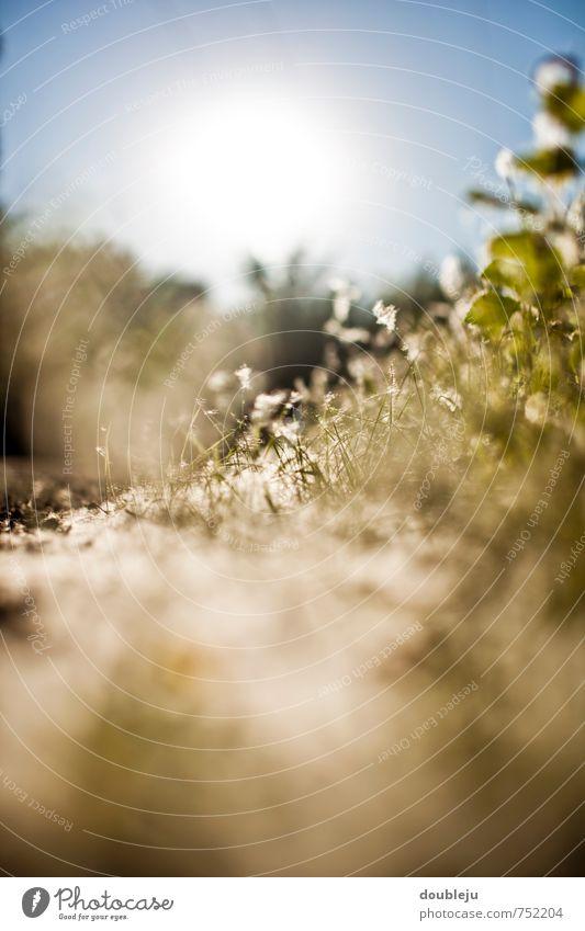 Nature Plant Sun Landscape Spring Esthetic