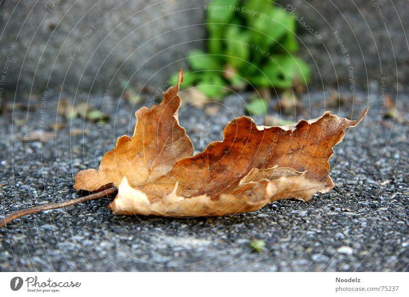 Green Leaf Loneliness Street Cold Autumn Brown Floor covering Asphalt Stalk Like