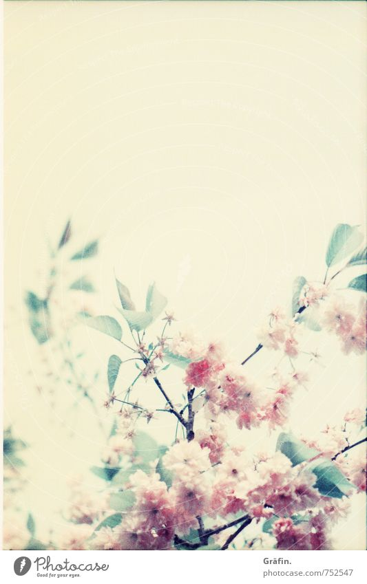 A bouquet of spring Environment Nature Plant Spring Tree Blossom Blossoming Fragrance Faded Growth Kitsch Natural Yellow Green Pink Romance Beautiful Idyll