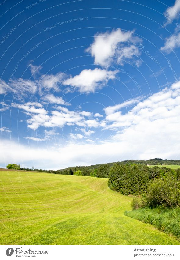 freshly mown Environment Nature Landscape Plant Air Sky Clouds Horizon Summer Weather Beautiful weather Warmth Tree Grass Bushes Meadow Field Forest Hill Blue