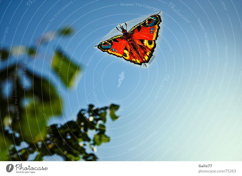 Sky Sun Summer Freedom Flying Free Butterfly Dragon Hang gliding