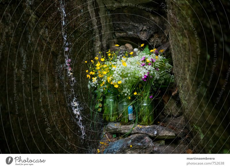 Sacred Grotto Spring Flower Rock Bouquet Sadness Grief Religion and faith Colour photo Exterior shot Deserted Copy Space left Copy Space right Day Long shot