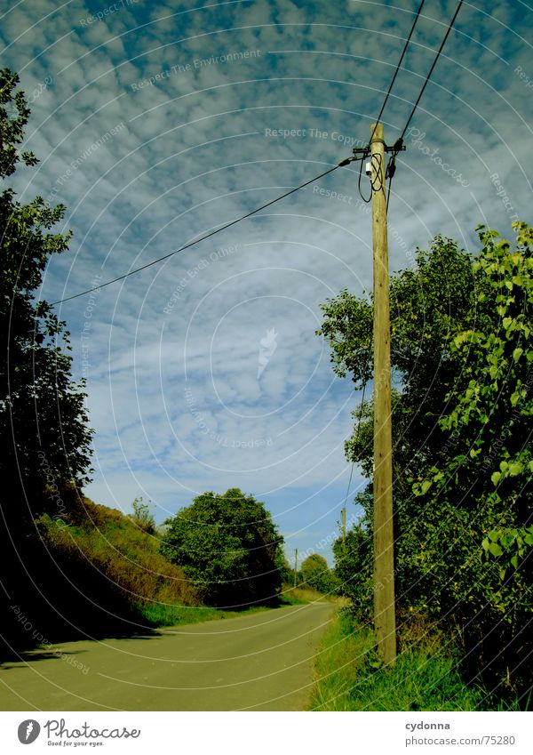 The way is the goal Overhead line Electricity Action Tree Green Altocumulus floccus Traffic infrastructure Summer Electricity pylon forwarding Street