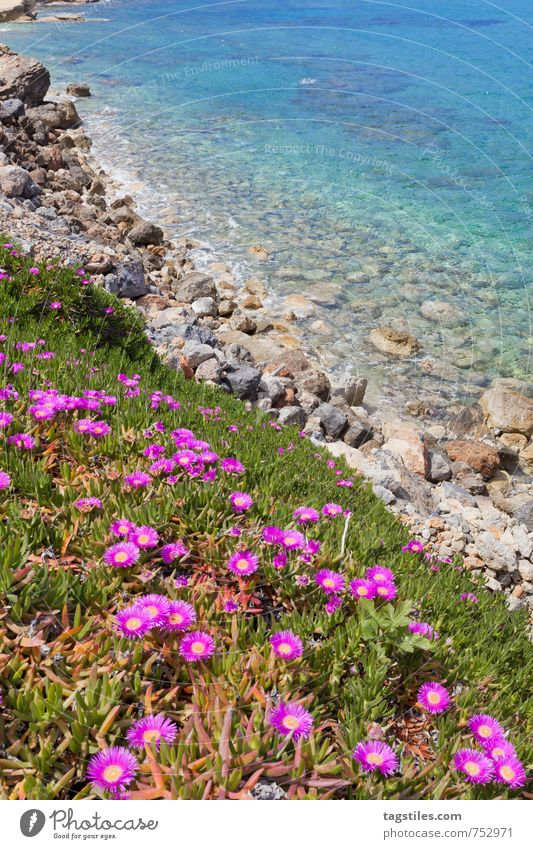 Nature Vacation & Travel Water Summer Ocean Relaxation Flower Landscape Calm Beach Spring Coast Travel photography Blossom Natural Rock