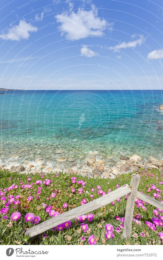 Nature Vacation & Travel Water Summer Ocean Relaxation Flower Landscape Calm Beach Spring Coast Travel photography Blossom Natural Idyll