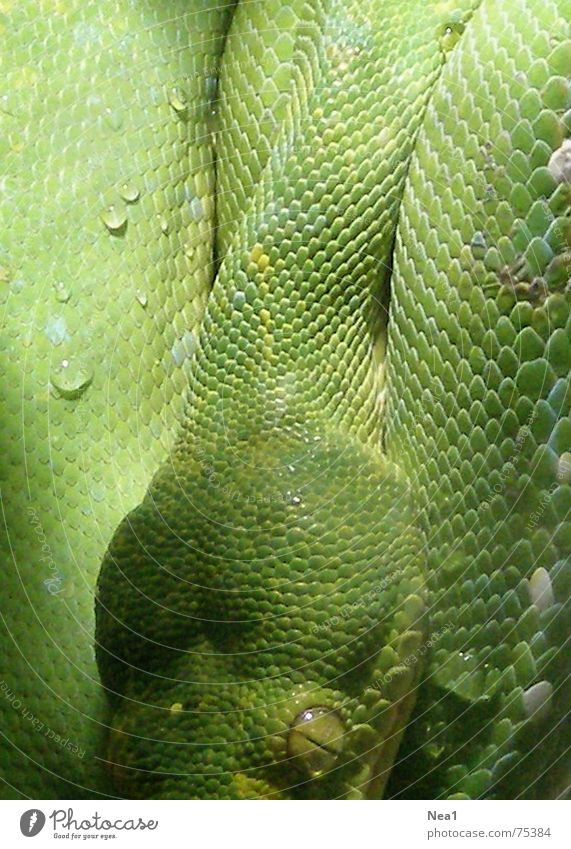 Green Animal Zoo Snake Reptiles Sin