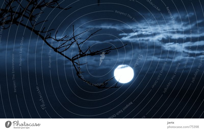 Sky Clouds Dark Fear Branch Creepy Moon Ghosts & Spectres  Hallowe'en Full  moon
