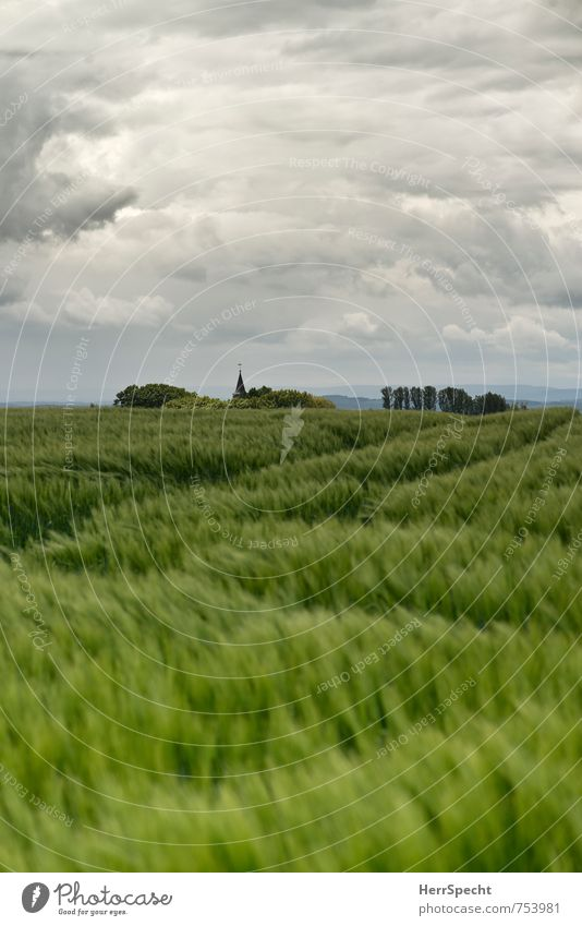 Sky Green Plant Tree Clouds Spring Gray Horizon Wind Large Fresh Esthetic Church Agriculture Saxony