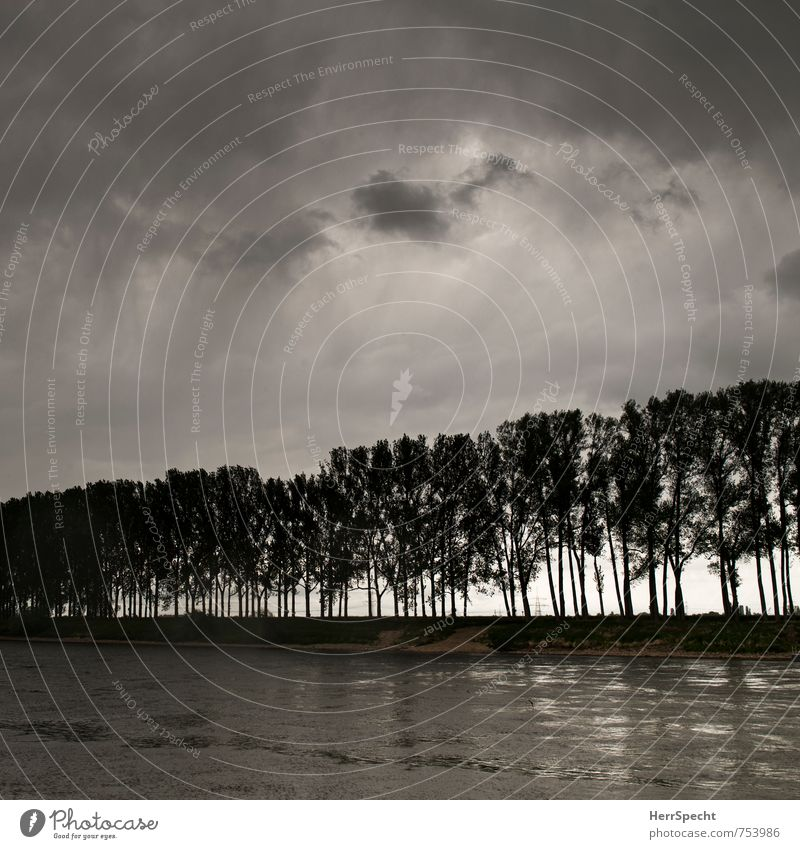 Sky Nature Tree Landscape Clouds Dark Cold Gray Rain Threat River River bank Gale Thunder and lightning Atmosphere Foliage plant