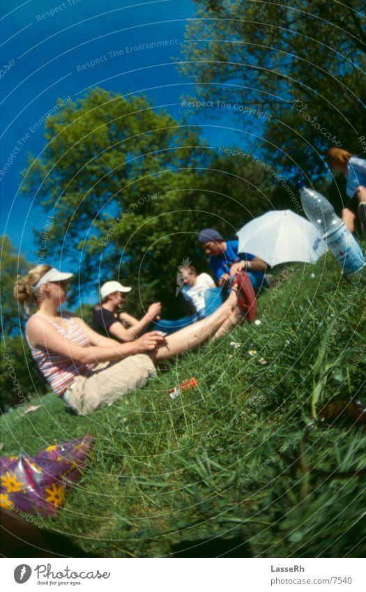 Beautiful Sun Green Summer Relaxation Meadow Grass