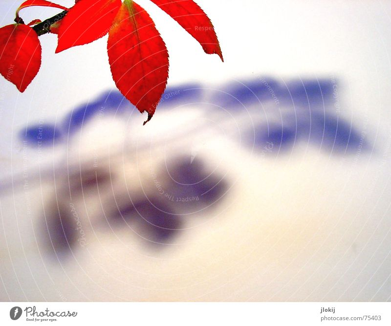 Tree Plant Red Leaf Autumn Lighting Observe Branch Twig Colouring