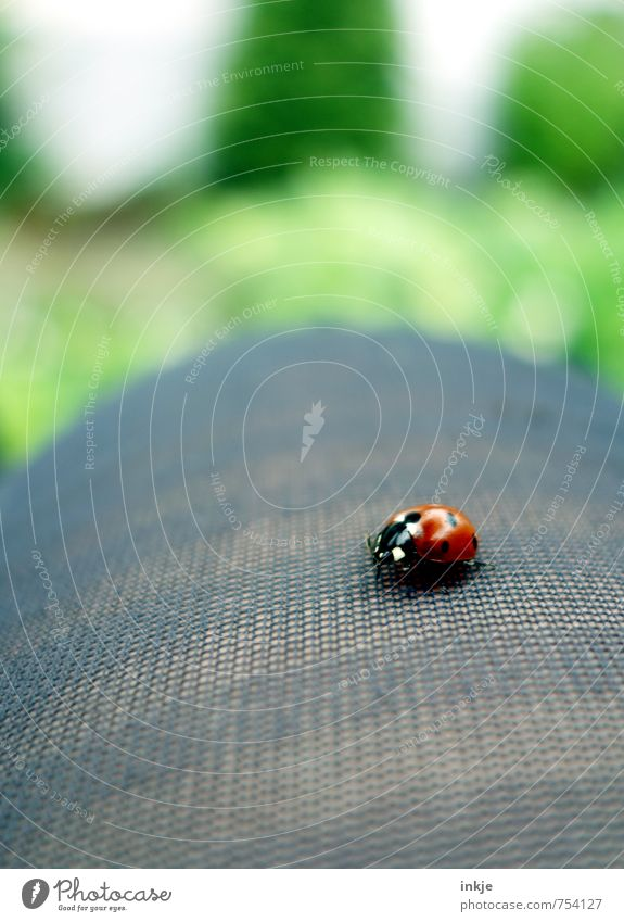 spot landing Lifestyle Leisure and hobbies Legs 1 Human being Animal Beetle Ladybird Crouch Crawl Sit Beautiful Small Natural Curiosity Cute Green Red Emotions