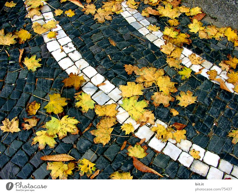 Leaf Yellow Street Autumn Lanes & trails Stone Art Moody Wind Climate Wet Stripe Change Round Gale Traffic infrastructure