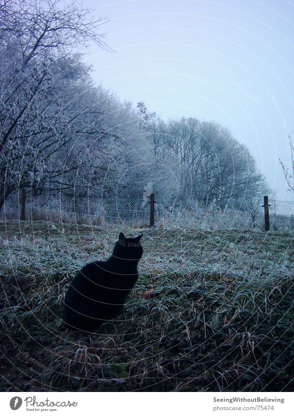 Tree Winter Calm Cold Meadow Cat
