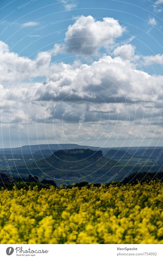 Look into the country Environment Nature Landscape Sky Clouds Spring Beautiful weather Plant Agricultural crop Canola Canola field Forest Hill Rock Saxony