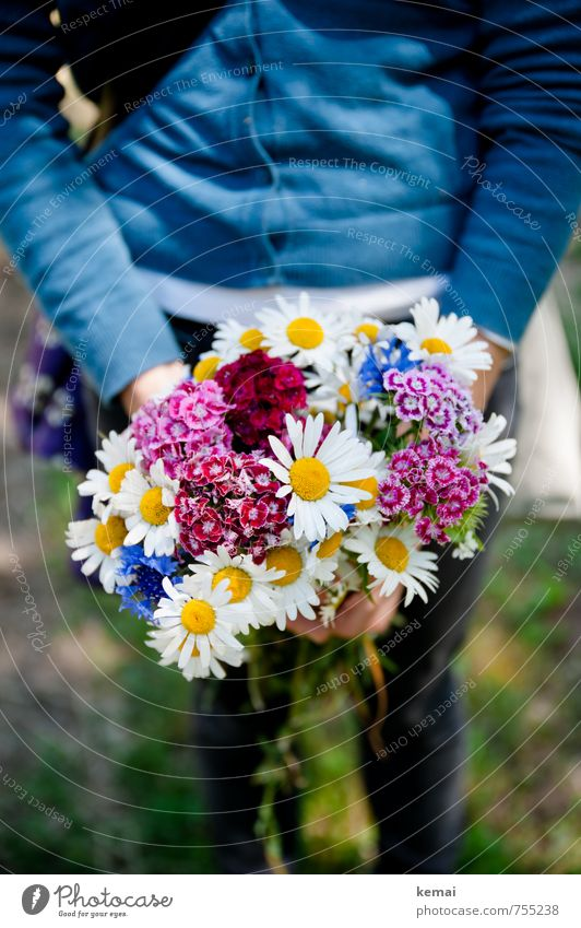 freshly picked Lifestyle Style Wellness Well-being Senses Fragrance Summer Decoration Human being Arm Legs 1 Flower Meadow flower Bouquet Marguerite To hold on