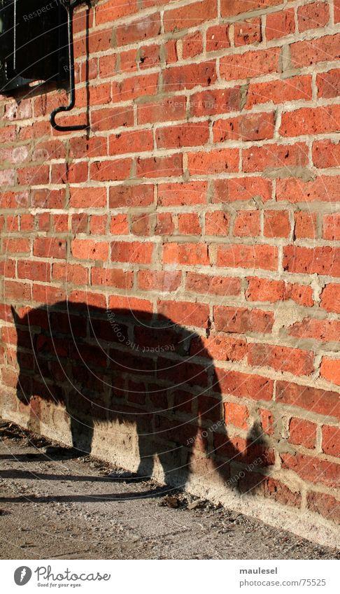 Graffiti Wall (barrier) Dog Fear Brick Jetty Evil Frightening Fairy tale Wolf Brooklyn Little Red Riding Hood Werewolf Purebred dog