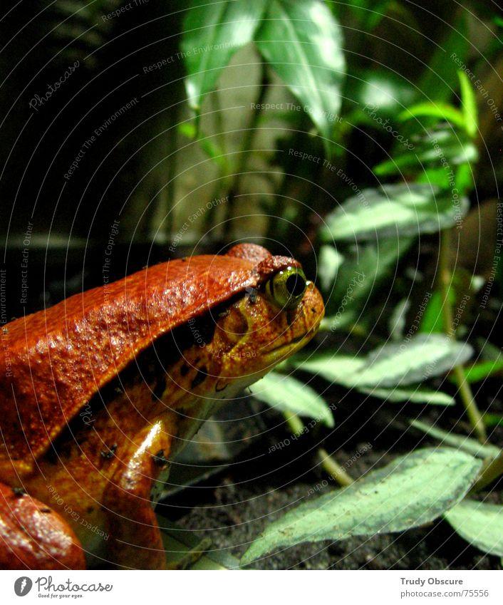 Water Red Leaf Animal Zoo Vegetable Americas Frog Captured Aquarium Amphibian Jail sentence Terrarium Socialism Enclosed Berlin zoo