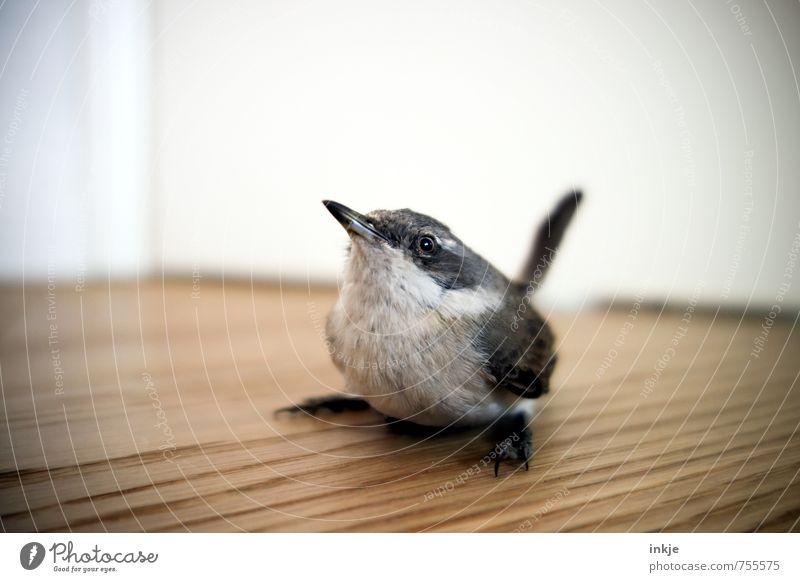City Animal Baby animal Emotions Bird Growth Sit Wild animal Wait Cute Curiosity Trust Discover Interest Wooden floor Experience