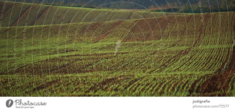 Green Line Brown Field Waves Earth Floor covering Hill Agriculture Harvest Sowing
