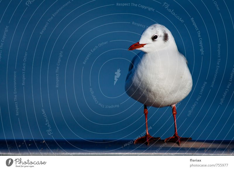 Vacation & Travel Blue White Red Animal Eyes Happy Bird Contentment Sit Wild animal Stand Wait Observe Feather River