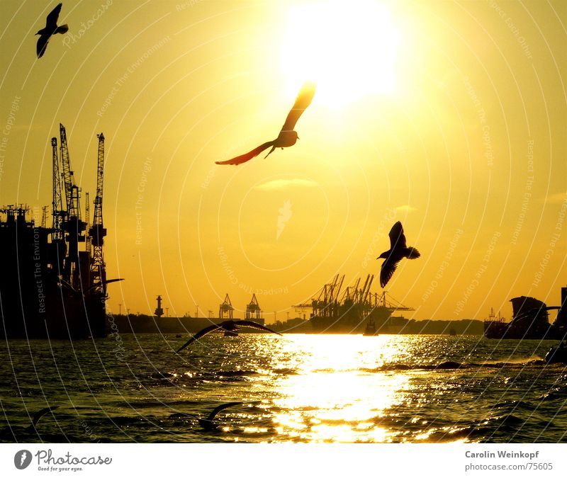Water Sun Summer Animal Sadness Moody Watercraft Waves Bird Wind Flying Hamburg Lifestyle Grief River Culture