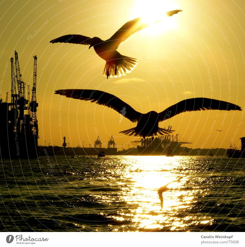 Beautiful Sun Loneliness Sadness Together Flying Hamburg Grief Harbour Longing Jetty Crane Dusk Elbe Attack River