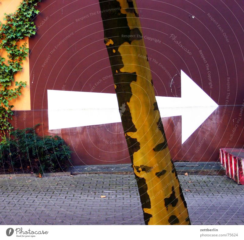 arrow Direction White Right Tree Wall (barrier) Facade Natural growth Plant Ivy Backyard Print shop Arrow Tree trunk American Sycamore Farm industrial yard