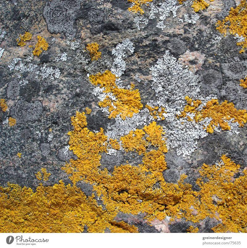 Nature Plant Yellow Colour Stone Background picture Rock Bond