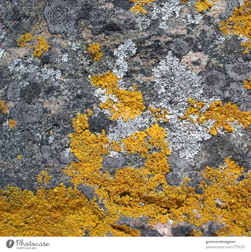 Nature Plant Yellow Colour Stone Background picture Rock Bond