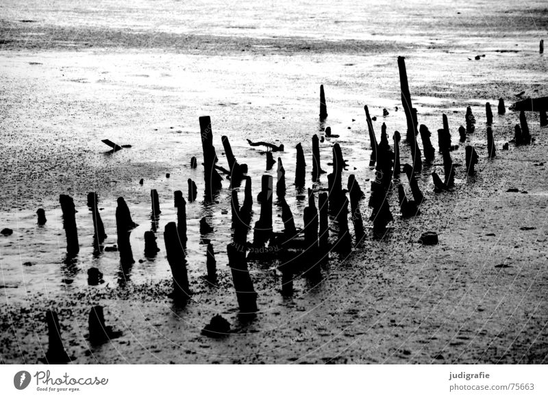 low tide Low tide Tide Mud flats Gray Gloomy Wood Black White Dark North Sea Pole weathered weathering Old Structures and shapes Line