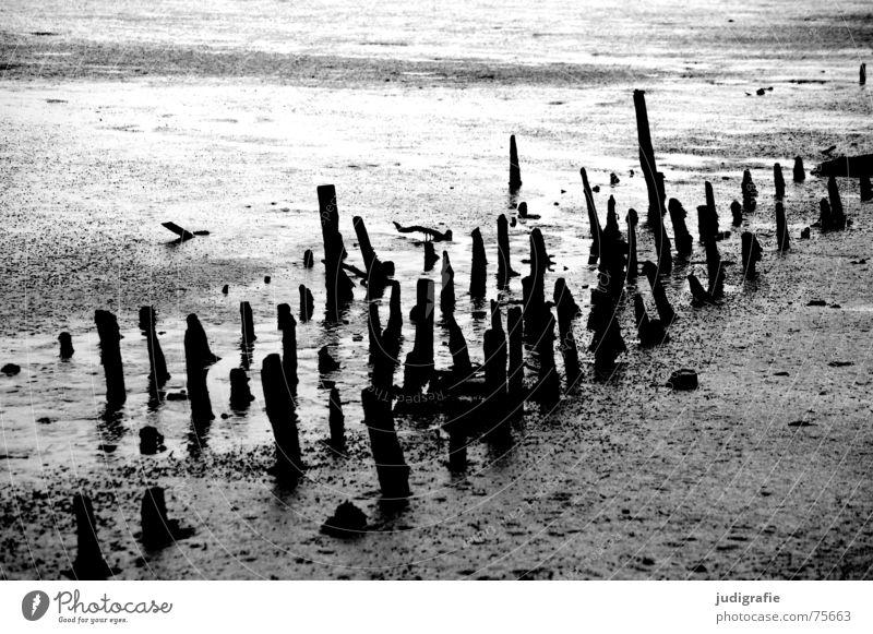 Old White Black Dark Wood Gray Line Gloomy North Sea Pole Mud Mud flats Tide Low tide