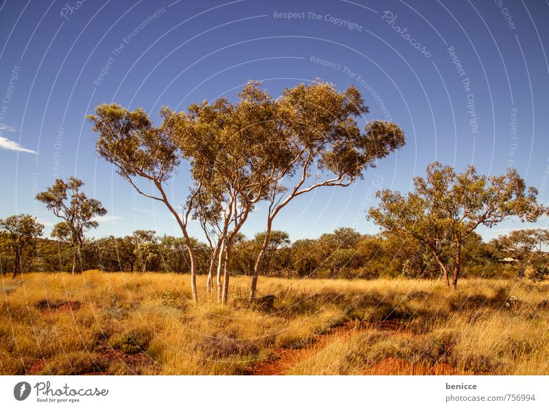 Sky Nature Tree Loneliness Red Landscape Animal Earth Bushes Countries Australia